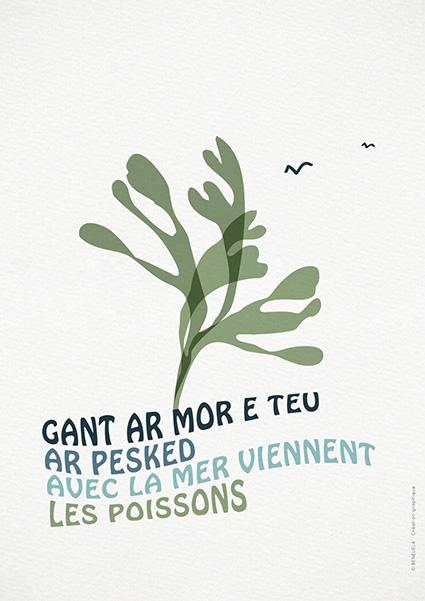 Graphiste-bretonne-finistère-Pont-l'abbé-Loctudy-benelela-illustration-création graphique-algue marine